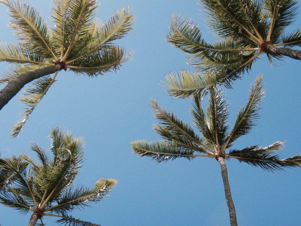 selbstfindungsreise hawaii palmen